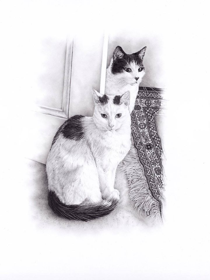 Hand-drawn pet cat pencil sketch by Gilly Cullen