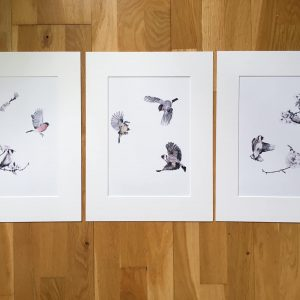 Garden Birds Prints, Set of Three