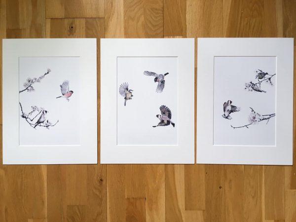 Garden Birds Prints, Set of Three